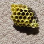 蜂の巣がベランダにできてしまった時の対処法